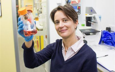 ORIA funding helping to advance stem cell research into eye disease By Alice Pébay, Neuroregeneration Research Unit, Centre for Eye Research Australia (CERA)
